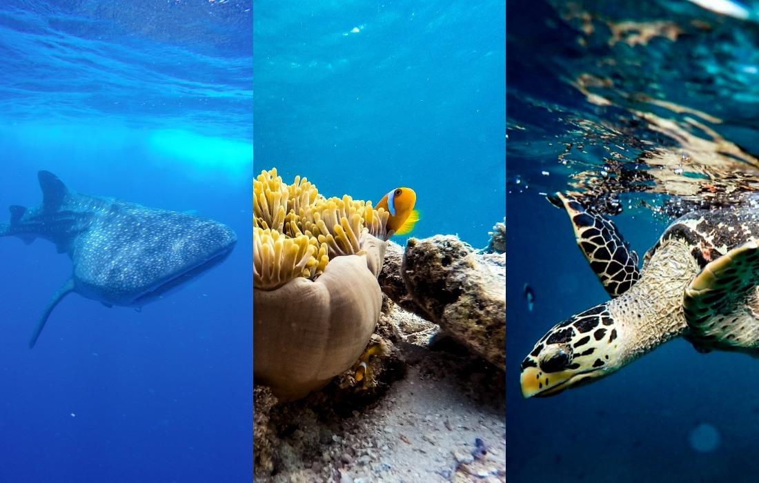 World Oceans Day at Vilamendhoo Maldives
